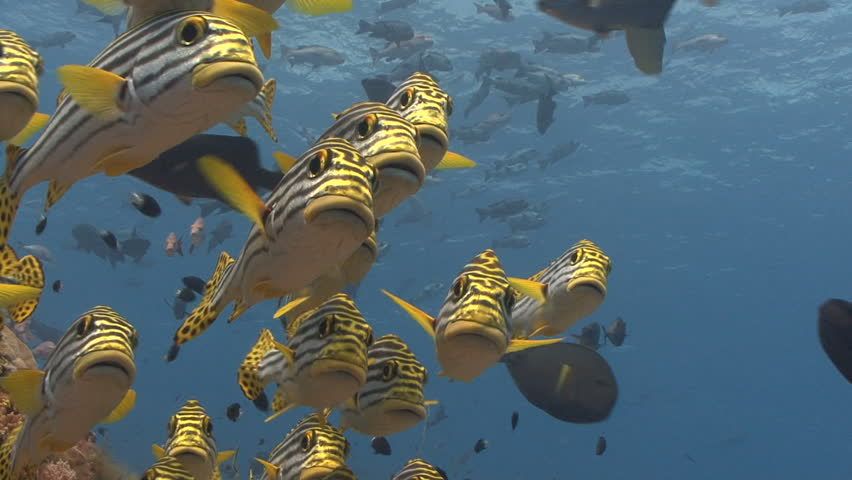 Group of curious fish