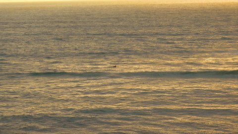 Lone surfer far out in the ocean during sunset at Sunset Cliffs, San Diego. Southern California lifestyle