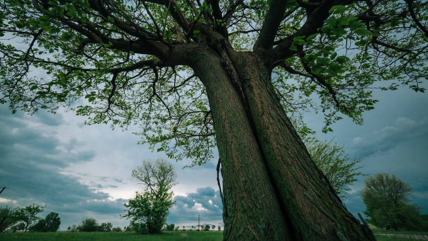 Dark clouds move behind a large tree as a storm moves in - 4K time lapse | Shutterstock HD Video #1029723047