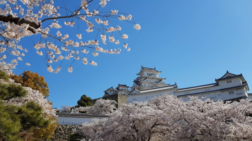 Cherry blossom and the Himeji castle in Japan | Shutterstock HD Video #1029813557