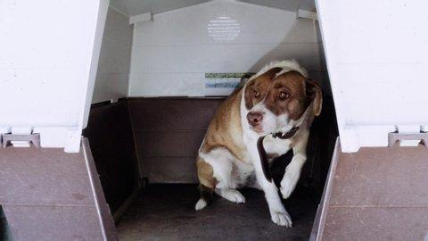 Battered dog in a plastic carrier