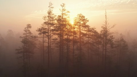Aerial drone shot of raised bog forest in thick fog during sunrise