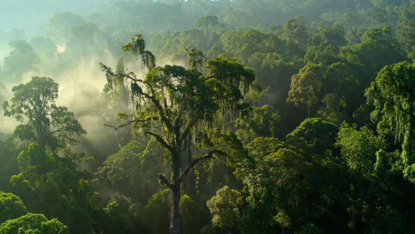 View of a drone in tropical forests covered with trees. | Shutterstock HD Video #1030200017