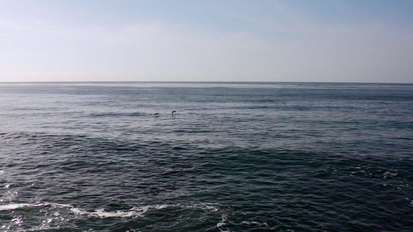 Aerial drone footage following pelicans over the ocean by the rocky coastline of Bird Rock and Windansea beach in La Jolla, San Diego, California.  | Shutterstock HD Video #1030274987