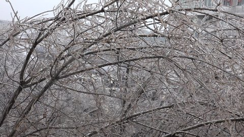 4K Closeup of icicle water frozen on tree branch in winter season, heavy cold rainy