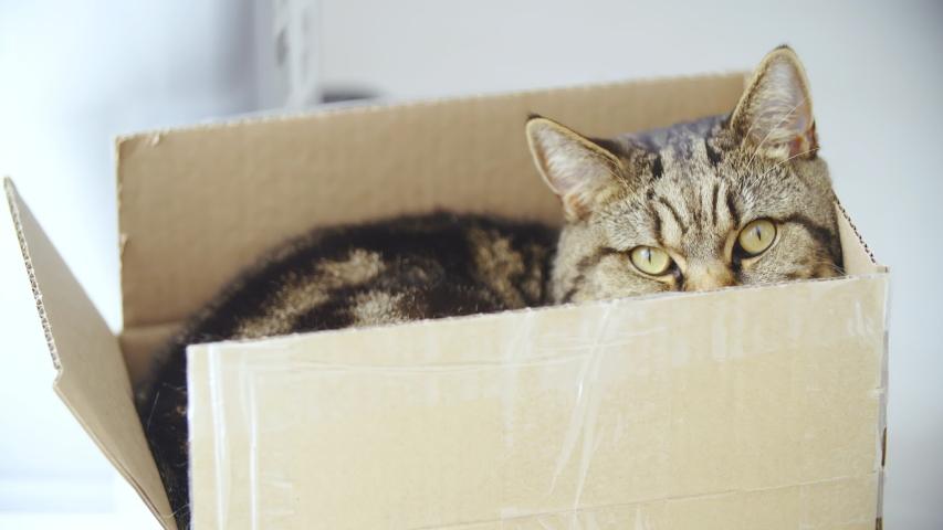 Cat hiding in a small box 4K | Shutterstock HD Video #1031108627
