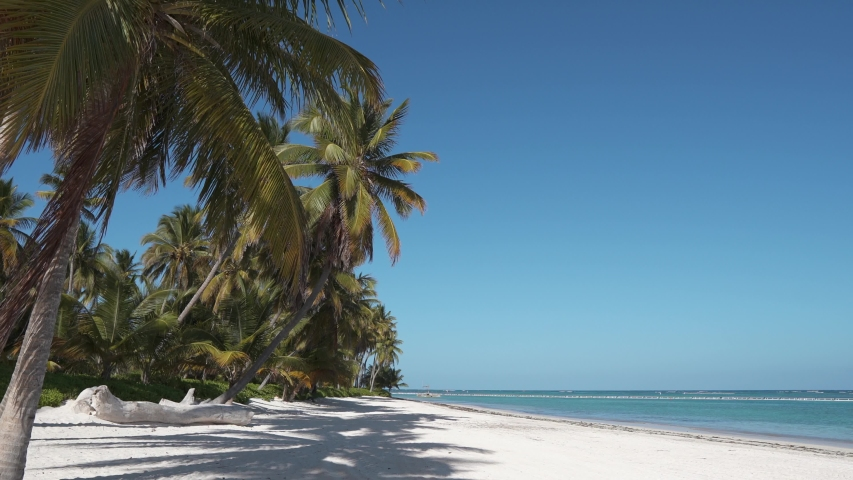 Wild caribbean beach. white sand and blue sky. Tall palms . Amazing summer travel vacation beach background. Turquoise sea water and palm trees | Shutterstock HD Video #1031275847