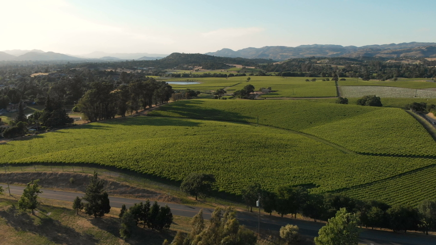 Aerial view of vineyard valley in Napa, California, United States. Sunny weather, sunset, summer. Drone shot | Shutterstock HD Video #1031323847
