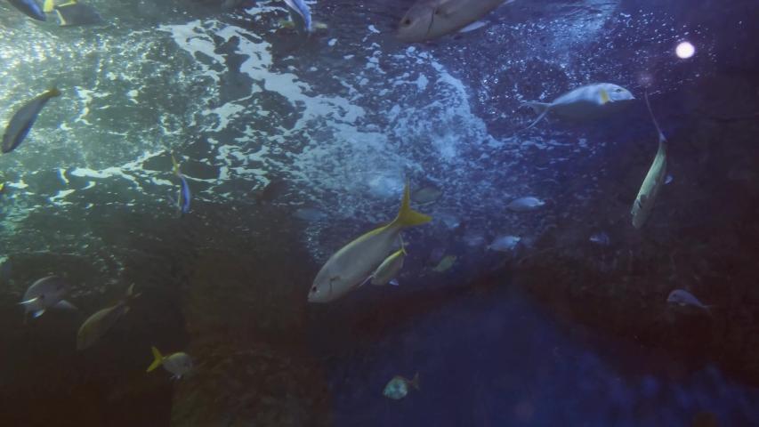 Close up beautiful fish in the aquarium. On decoration of aquatic plants background   Shutterstock HD Video #1032078017