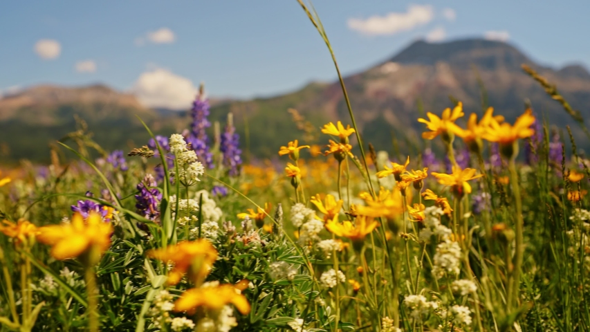 Moving through a field of wild flowers at plant height before rising to see mountains | Shutterstock HD Video #1032329057