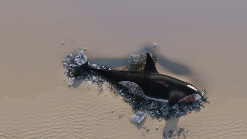 Killer Whale Dead by Ocean Pollution | Shutterstock HD Video #1032346457