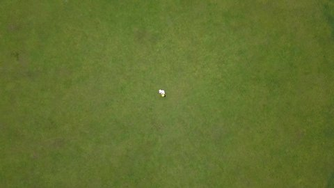 Rotating drone shot, top view, of a red and white golf flag,ing in the wind, on a bright green golf field, on a sunny day