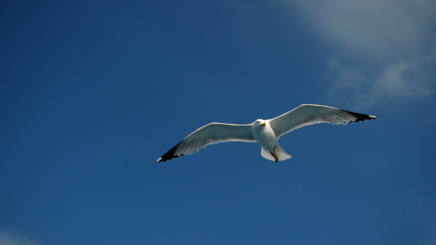 Wild bird. Close-up shot of seagull soaring in the sky over the Mediterranean sea and catching a thrown piece of bread. Greece. Slow motion. HD | Shutterstock HD Video #1032963317
