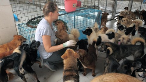 Close-up of young girl petting caged stray dogs in pet shelter. People, Animals, Volunteering And Helping Concept.