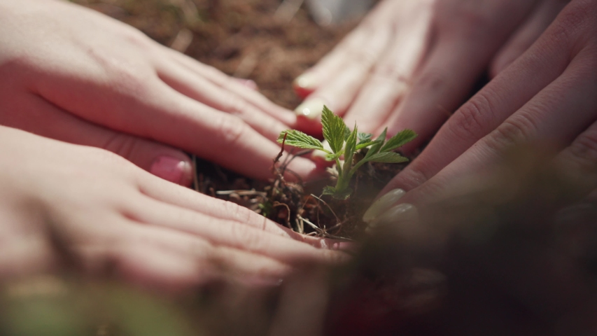 Close-up view of helpful girls planting trees in the forest adjusting soil to the seedling to grow. Green nature concept. #1033090157
