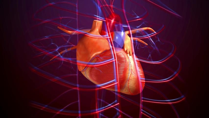 4K 3D render footage of heart beat   Shutterstock HD Video #1033385507