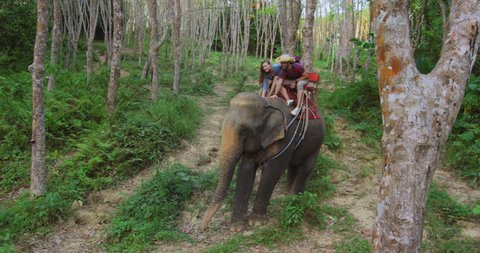 Loving tourist couple giving elephant affection and love while riding elephant on tour in lush green forest in Thailand Asia.