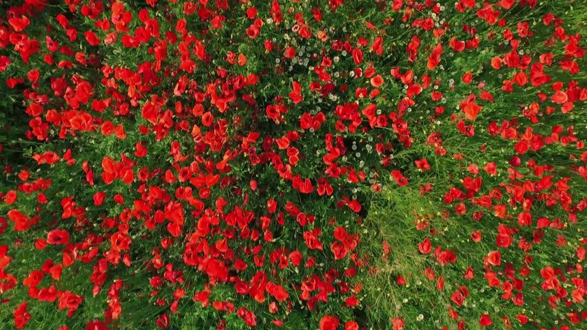 flower background design floral retro stock footage video