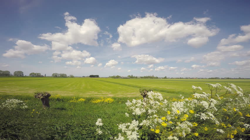 Meadows in the spring with blue and white skies and elderflower swaying in the wind, Holland. Ultra wide angle.