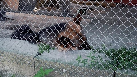 The sad dog lies on the ground in a cage. German Shepherd. He turns his head with camera side. View through a metal grid.