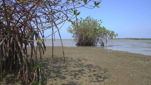 Mangrove forest with beginning flood in South America, North of Peru near Puerto Pizarro