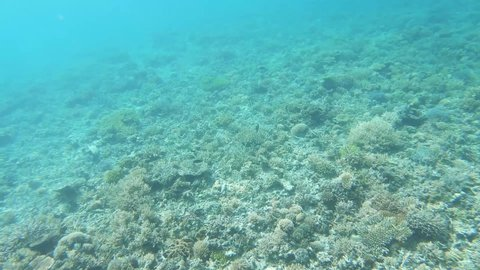 Underwater coral reef video scene with tropical fish swimming over staghorn and table corals at Isle Signal in New Caledonia, French Polynesia, South Pacific Ocean.