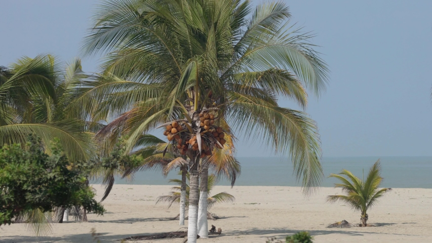 Palm trees at a beach at the Pacific Ocean in South America, Peru | Shutterstock HD Video #1037516267