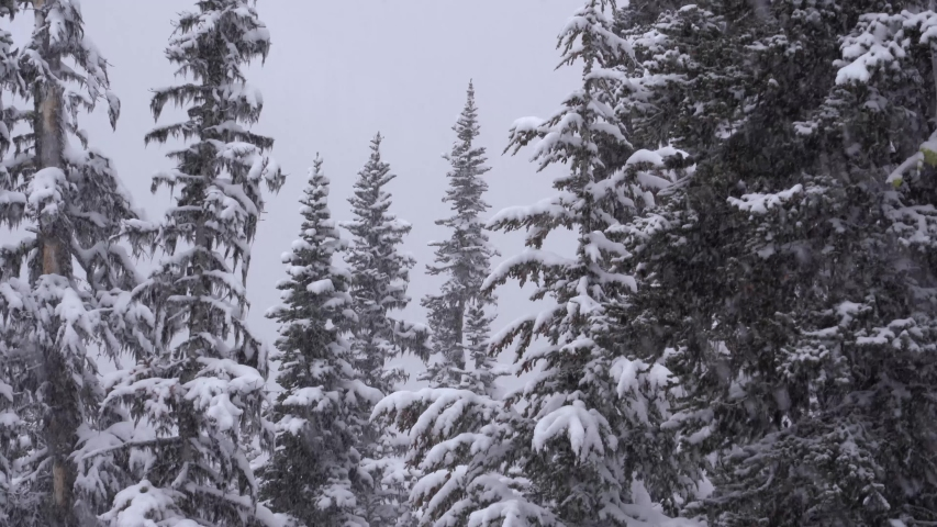 4K footage of thick snowfall in winter on forest trees | Shutterstock HD Video #1038405797