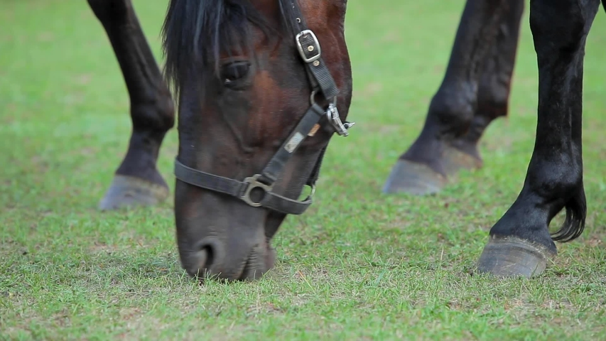 Close-up beautiful horse grazes in a green meadow on a ranch. Equestrian sport. Pets. Domestic animals. | Shutterstock HD Video #1039310267
