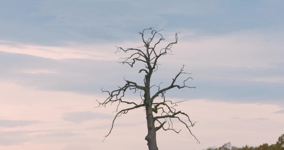 Single tree in the valley. Leafless strange tree in the middle of the field. Lifeless between alive concept. | Shutterstock HD Video #1040989337