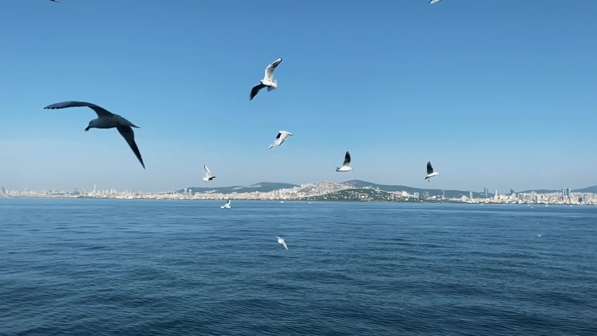 People are feeding seagulls while ferry moves | Shutterstock HD Video #1041091957