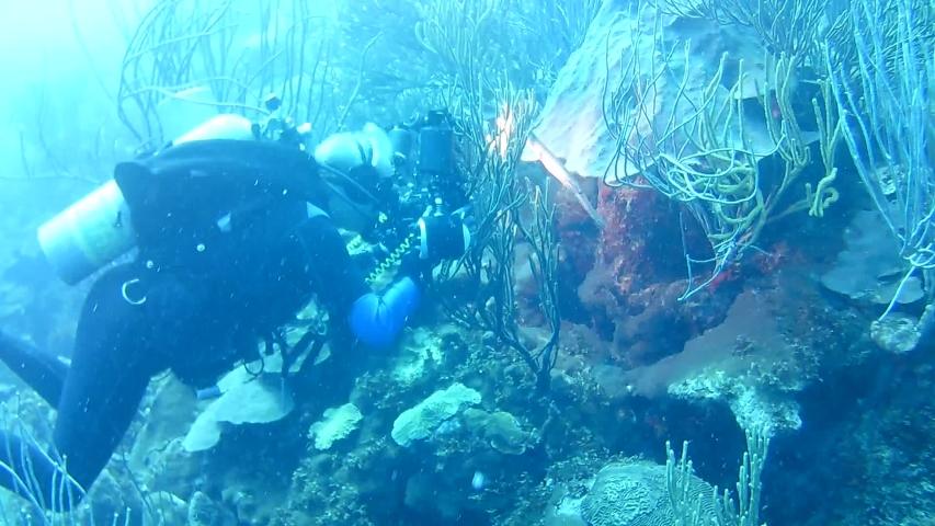 Coral life caribbean sea Bonaire island underwater diving divers video   Shutterstock HD Video #1041338407