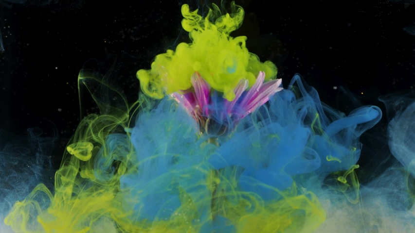 Flower under water and Splashes of colored ink, bright colors. Creative and color mix, abstract swirls of different colors on a black background   Shutterstock HD Video #1041464437