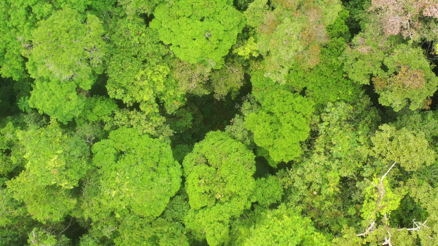 Aerial view of a green rainforest foliage, Congo Basin. Odzala National Park, Republic of Congo. | Shutterstock HD Video #1041667807