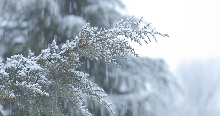 Auli, Uttarakhand / India - Nov. 16 2018 : Heavy Snowfall in Auli known as heaven of Uttarakhand. | Shutterstock HD Video #1042679527