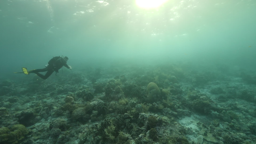 Slow motion shot Diver on background School of fish underwater landscape in Kepulauan Banda Indonesia. Swimming in world colorful beautiful wildlife of reefs and algae. Inhabitants in search of food. | Shutterstock HD Video #1042808797