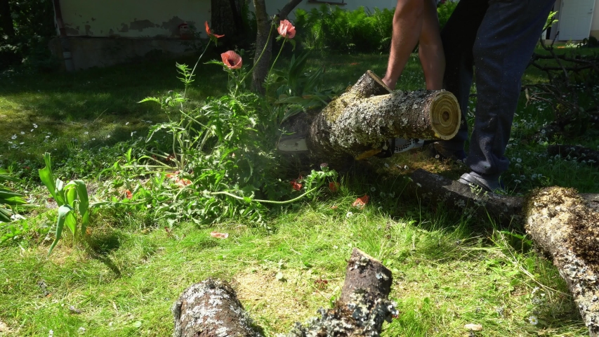 Hands with chainsaw sawing trunk of fallen tree in garden. Gimbal motion shot   Shutterstock HD Video #1042813057