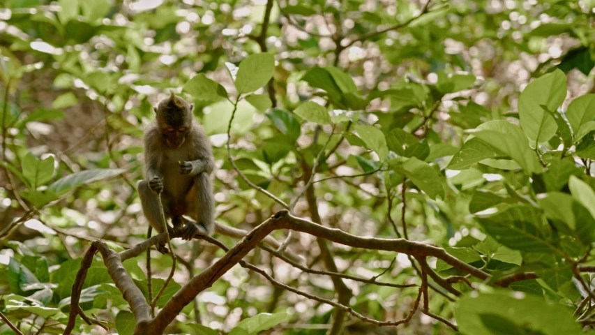 Visiting monkey forest at Ubud, Bali | Shutterstock HD Video #1044792607