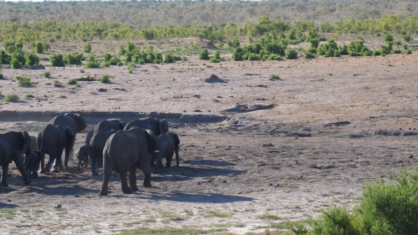 Herd of African Bush elephants walking together Namibia | Shutterstock HD Video #1045012867