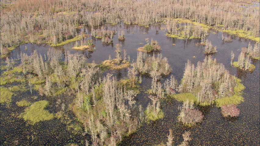 florida's okefenokee swamp Ap english language & composition read the following two passages about florida™s okefenokee swamp carefully then write an essay in which.
