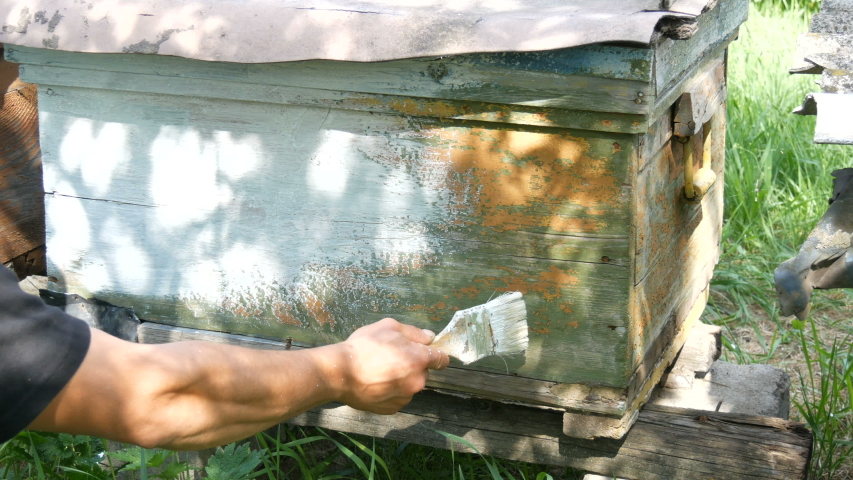 Old shabby wooden vintage bee hive, which the beekeeper paints with a brush with white paint and renews it for the summer. | Shutterstock HD Video #1049865127