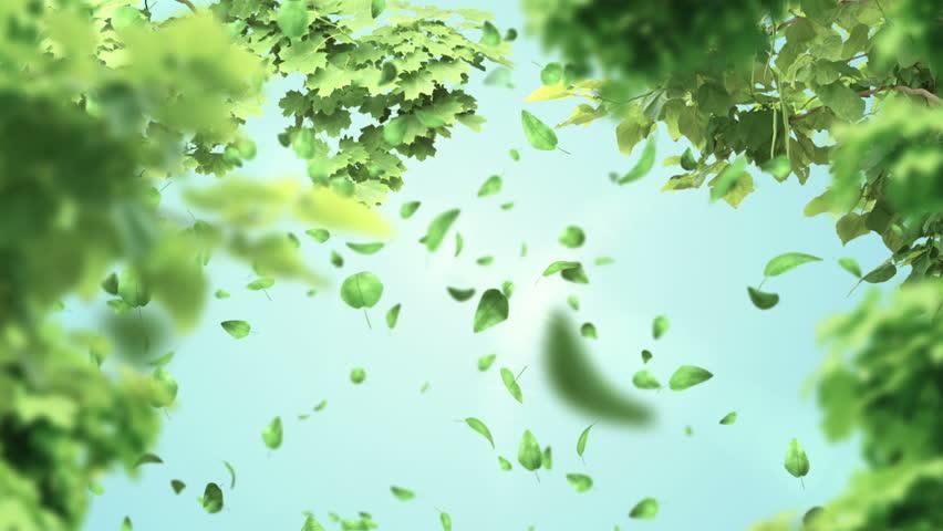 leafs in the wind bilaketarekin bat datozen irudiak