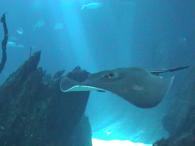 Under water scene with marine life, manta