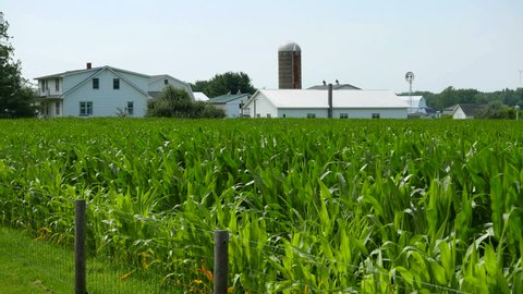Indiana Farmland Cornfield. Corn field and farm house and land in rural Indiana, United States.