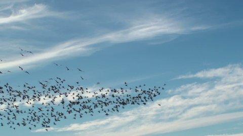 Beautiful bird flight scenic created in clouds, blue sky. 1920x1080