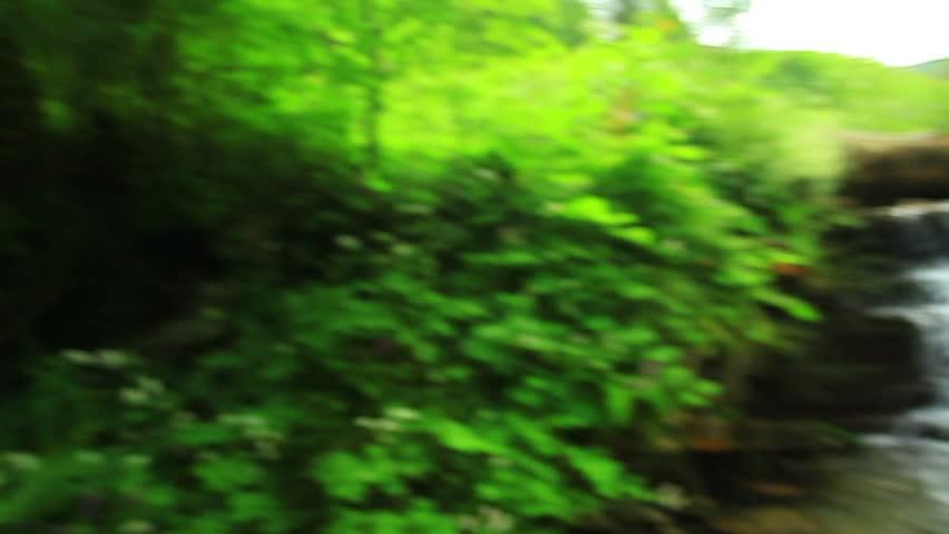 Creek in the woods | Shutterstock HD Video #10918757