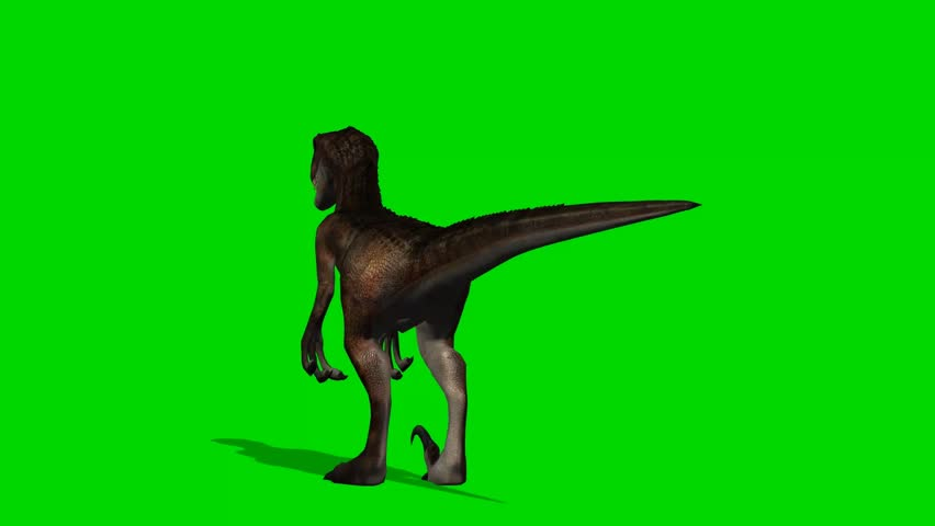 Velocirapor Dinosaurs stand and look around - green screen  #10961957