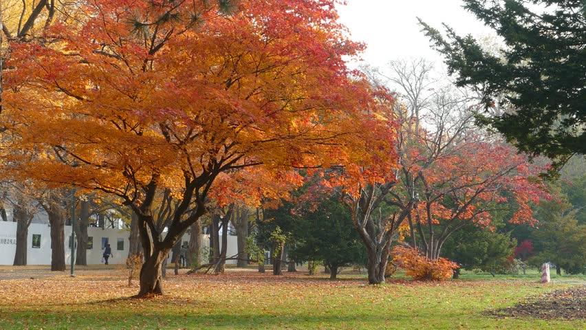 Sapporo, Japan - Nov 01 : College campus at fall season  | Shutterstock HD Video #10968737