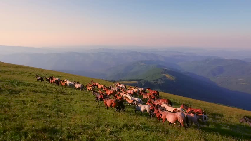 Aerial Of Horses Running Through Beautiful Sunny Mountain Meadow Spring Nature Animals Landscape Background Wild Nature Stallions Galloping Outdoor Livestock Concept | Shutterstock HD Video #11017454