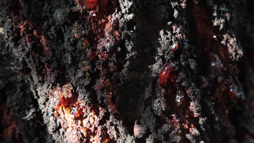Old tree bark texture, sap, resin, extreme close up, tilt up